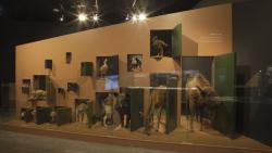jouw Brabant, mijn Brabant - Natuurmuseum Brabant (foto: Roel Diepstraten)